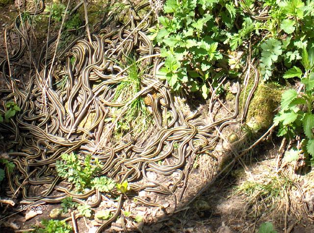 Snakepit1